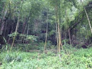 隣は竹林、山林